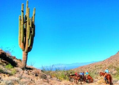 cactus1_Deep